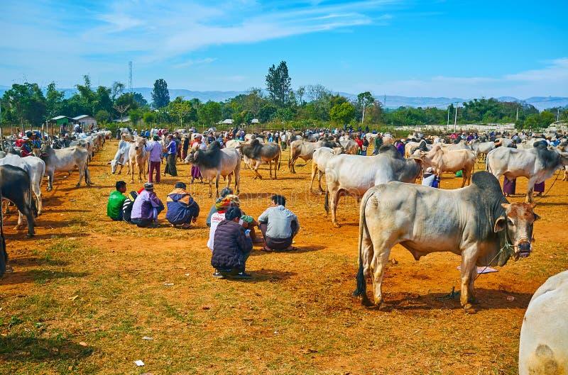 Sławny Heho bydło rynek, Myanmar obrazy stock