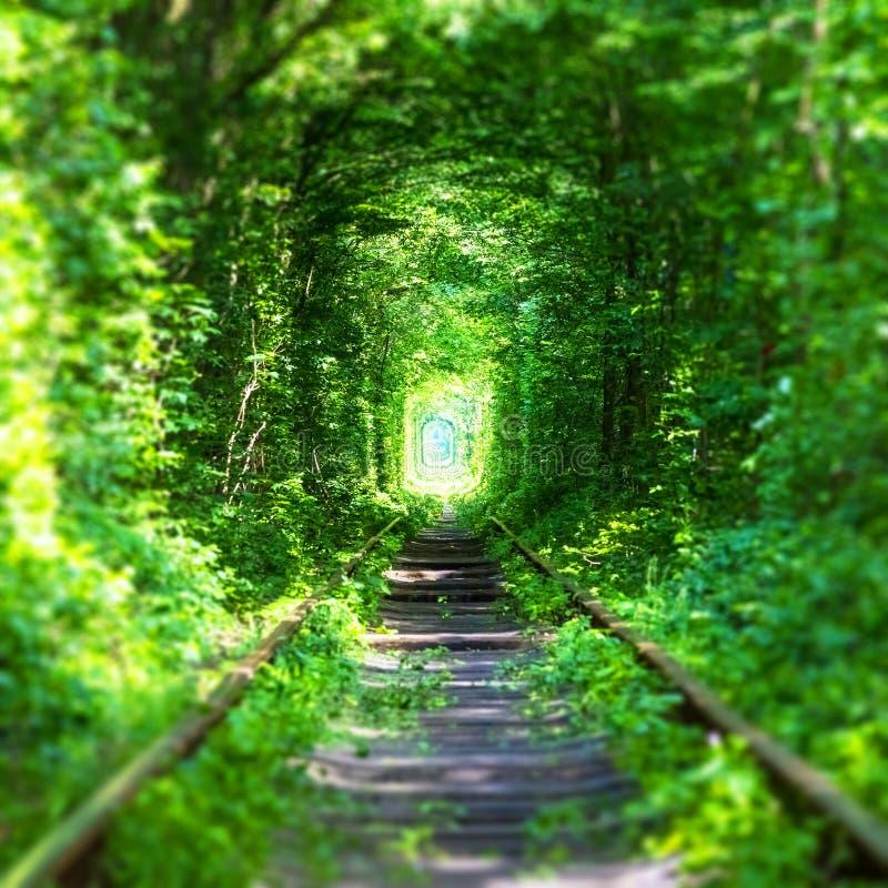 Sławny ` tunel miłości ` w Ukraina zdjęcie stock