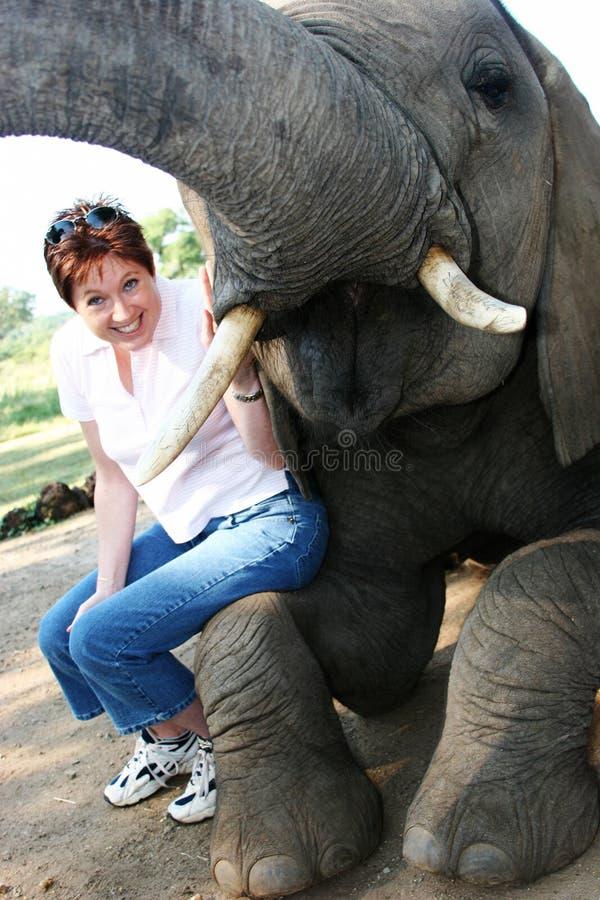 słoń fotografia stock