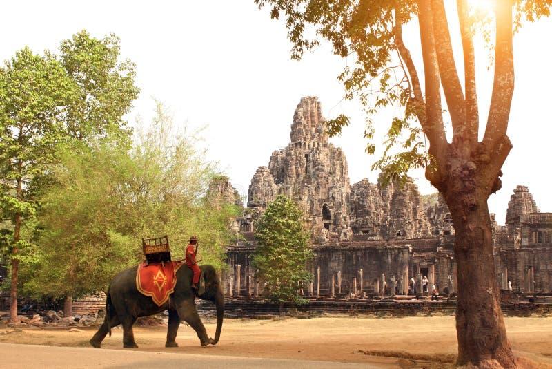 Słoń i Prasat Bayon świątynia, Angkor Wat kompleks, Siem Przeprowadzamy żniwa, obrazy stock