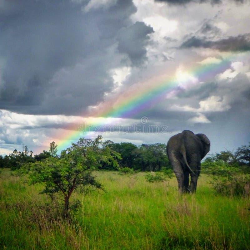 Słoń i tęcza obraz stock