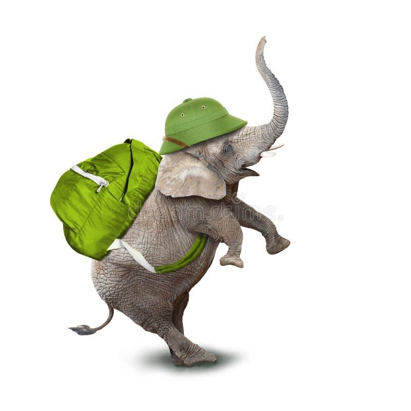 Słoń jako poszukiwacz przygód zdjęcie royalty free