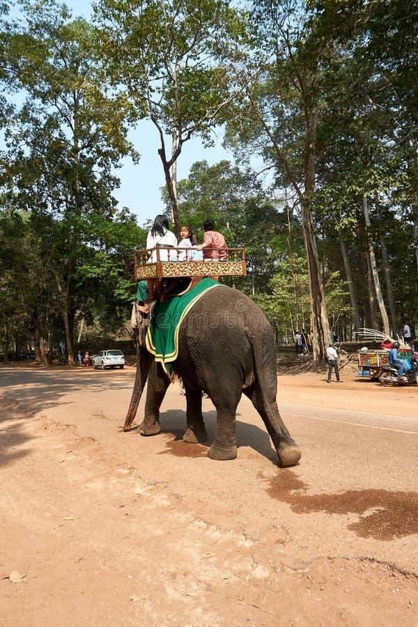 Słoń jazda w świątynnym powikłanym Angkor Wat Siem Przeprowadza żniwa, Kambodża fotografia stock