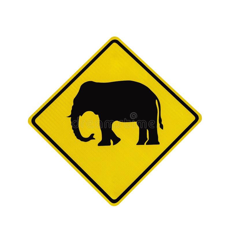Słoń krzyżuje drogowego znaka odizolowywającego obraz royalty free
