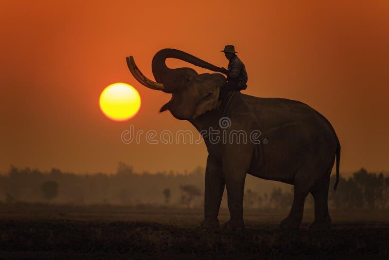 Słoń przy safari obrazy royalty free