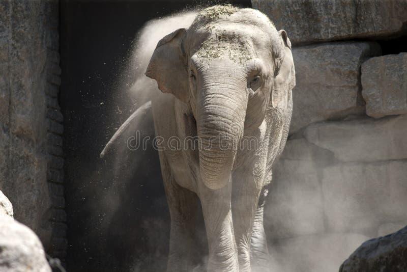 Słoń przy zoo zdjęcia stock
