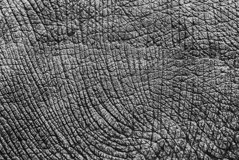 Słoń skóry tekstura zdjęcie stock