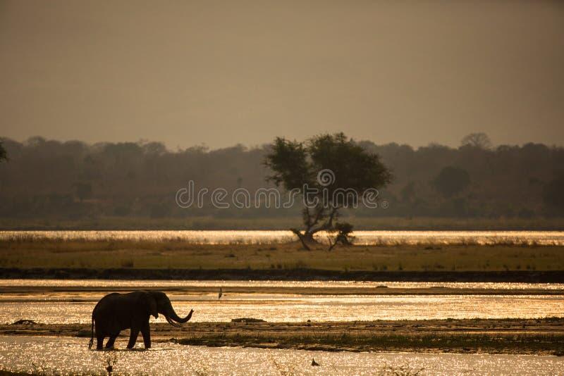 Słoń sylwetki rzeki podczas zmierzchu skrzyżowanie fotografia stock