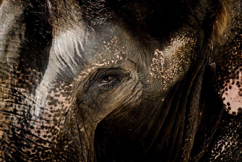 Słoń twarz z grunge skóry teksturą obraz stock
