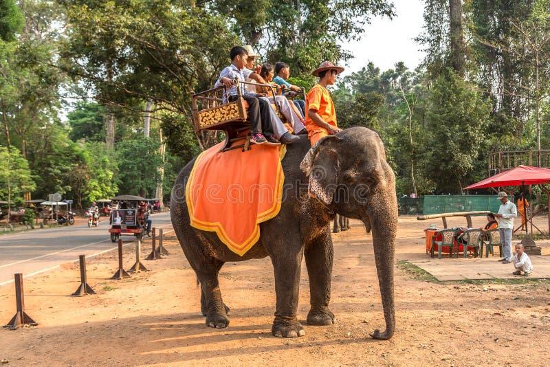 Słoń w Angkor Wat, Kambodża zdjęcie royalty free
