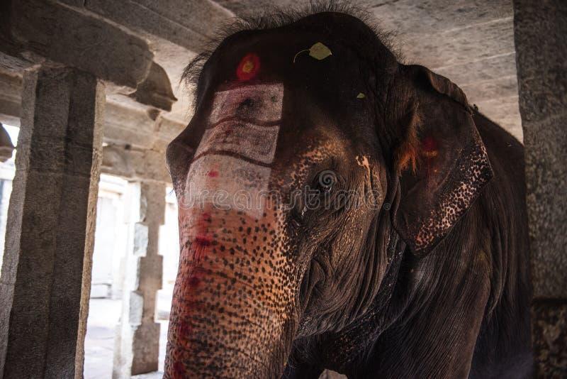 Słoń w Hinduskiej Virupaksha świątyni obraz stock