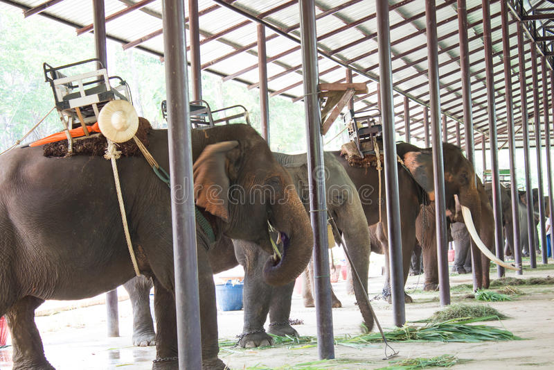 Słoń w wodzie zdjęcie royalty free