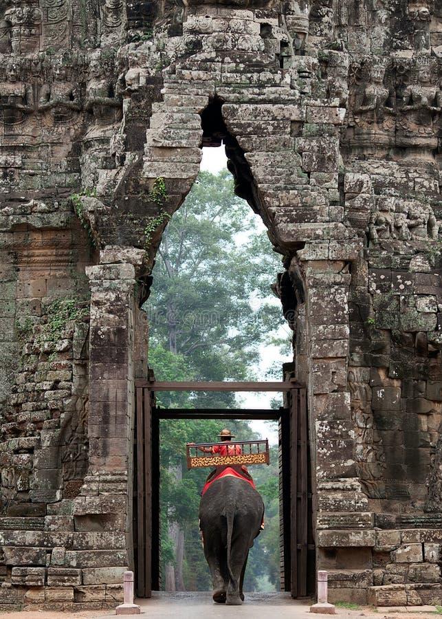 Słoń Wychodzi Angkor Wat zdjęcia stock