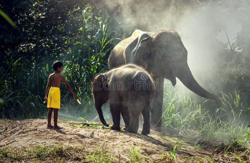 Słoń z dzieckiem fotografia stock