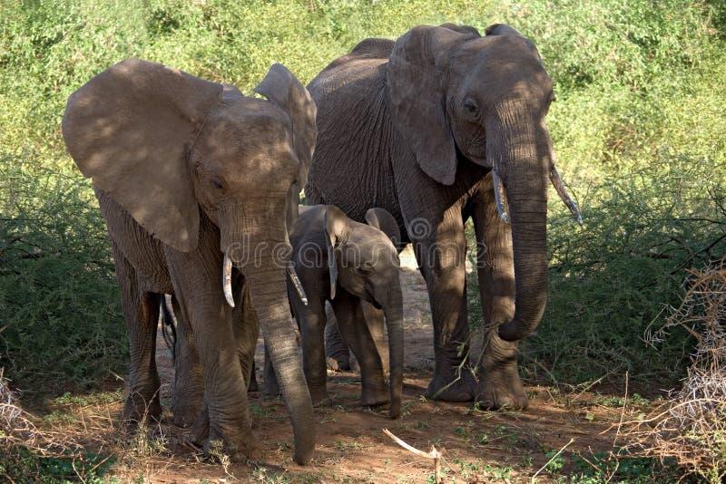 słoń zwierzę. fotografia stock