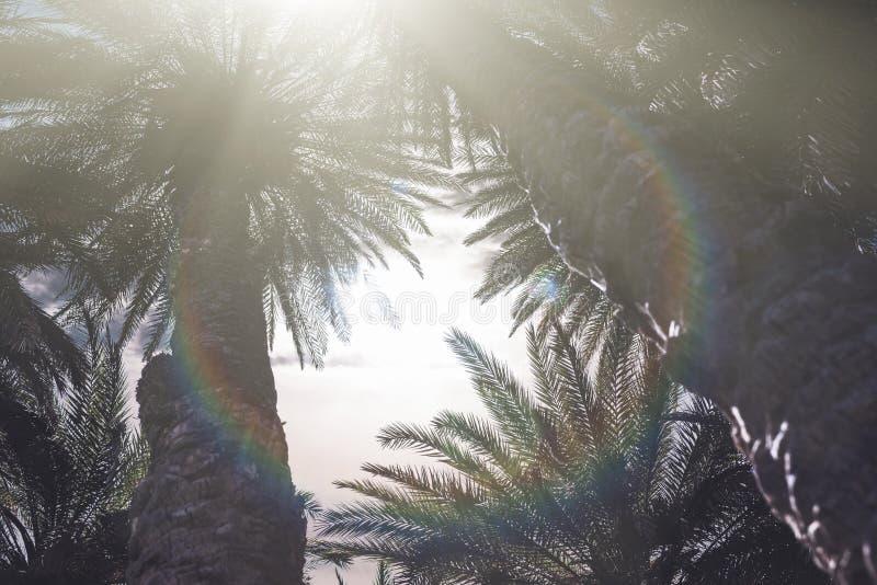 Słońca świecenie i promienie penetrują przez gałąź drzewka palmowe na tropikalnej plaży obrazy royalty free