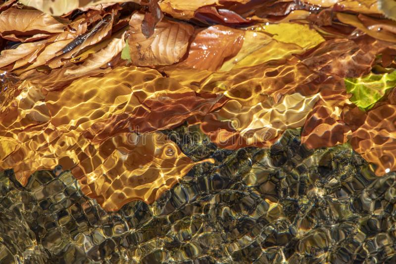 Słońca świecenie na jasnej wodzie z żółtymi jesień liśćmi w nim obrazy stock