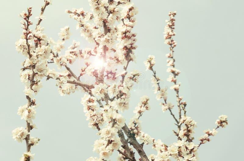 Słońca behide wiosny kwiaty drzewo fotografia royalty free