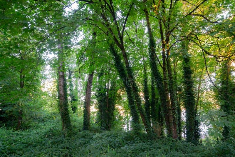 Słońca jaśnienie przez baldachimu zieleni liście zdjęcia royalty free