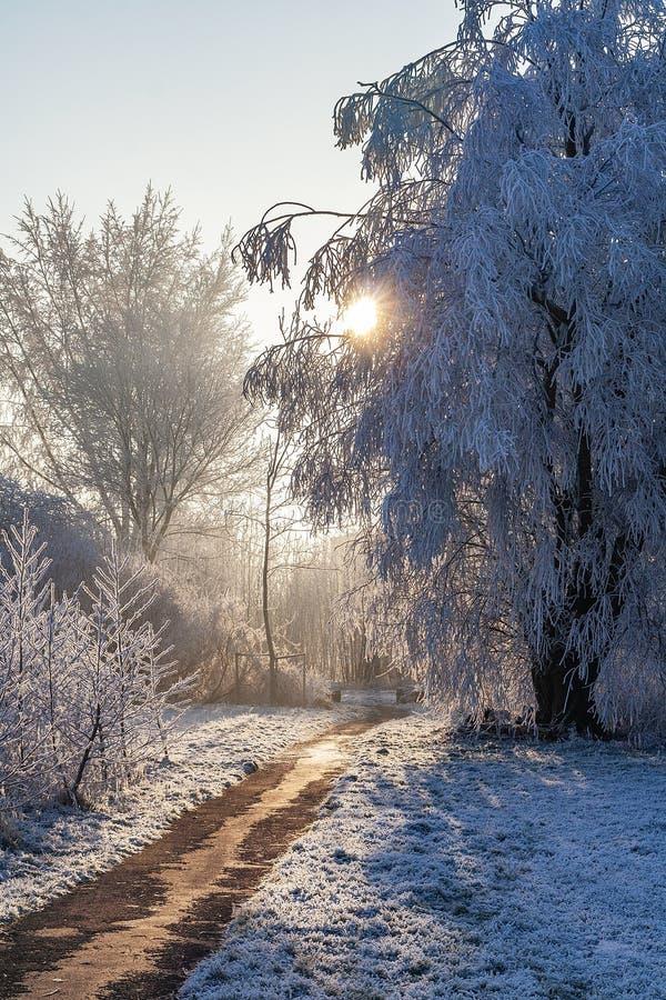 Słońca jaśnienie przez frosted drzew fotografia royalty free