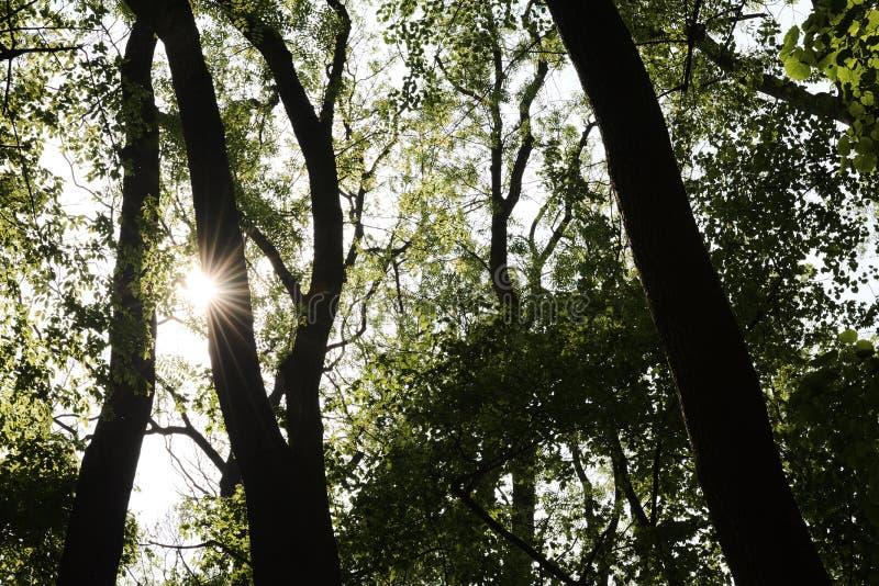 Słońca jaśnienie przez gałąź i liści w lesie obraz stock