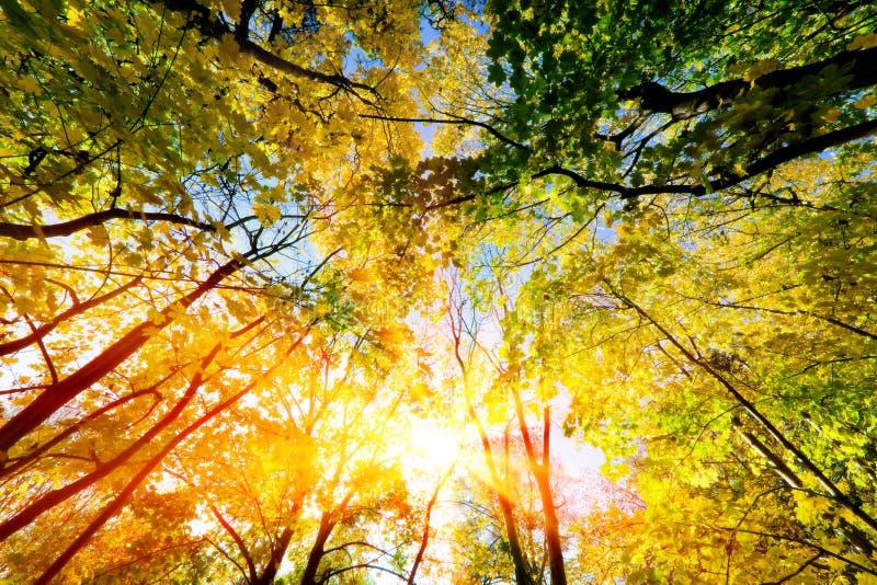 Słońca jaśnienie przez lata, jesieni drzew i kolorowych liści, zdjęcia royalty free