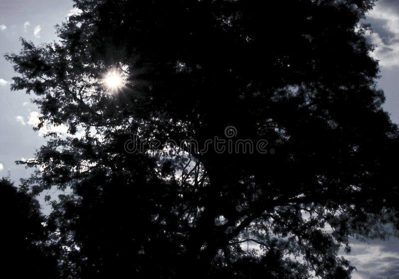 SŁOŃCA jaśnienie PRZEZ liści drzewo zdjęcia royalty free