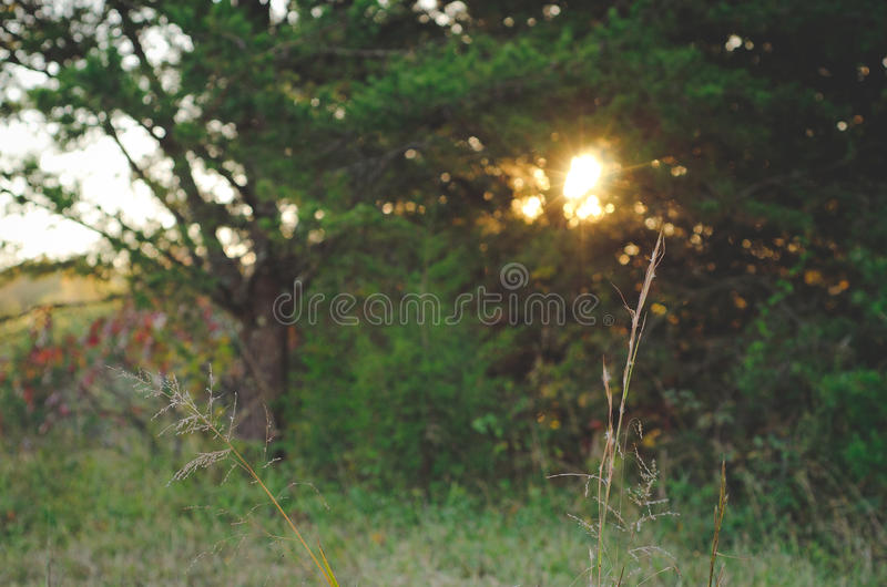 Słońca położenie na gospodarstwie rolnym obrazy royalty free