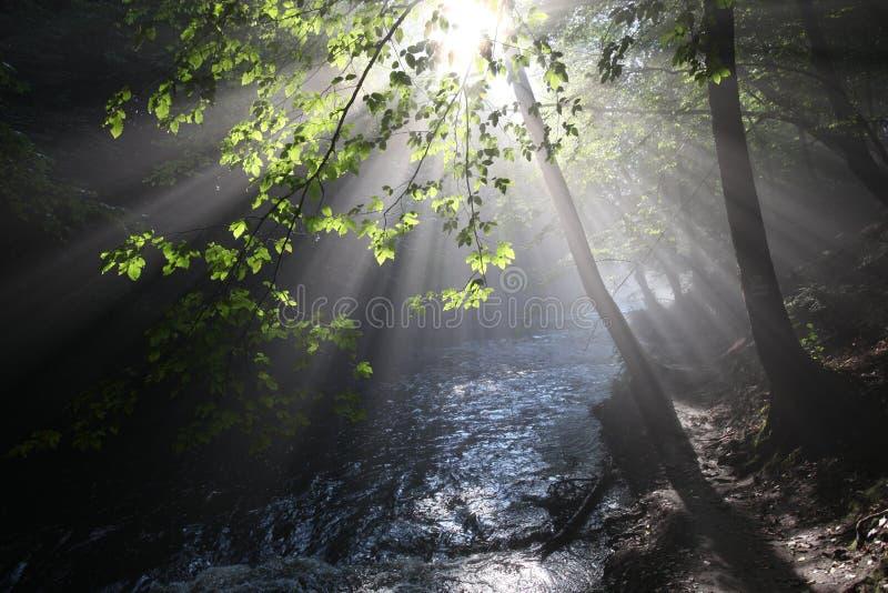Słońca ` s promienie iluminują ciemnego wąwóz obrazy royalty free