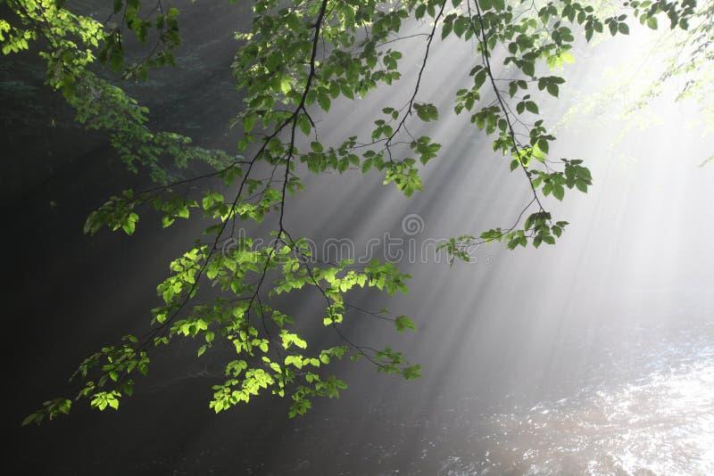 Słońca ` s promienie iluminują ciemnego wąwóz zdjęcie stock