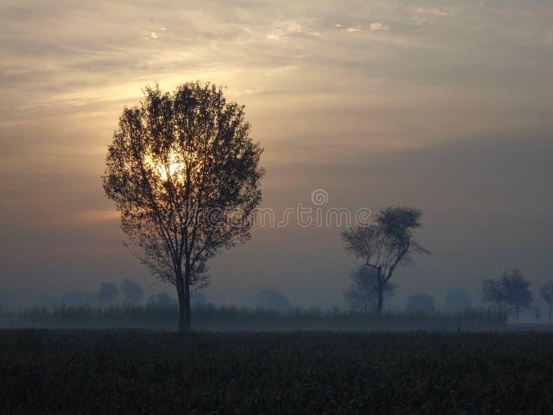 Słońca wydźwignięcie w tle zielony drzewo obraz stock