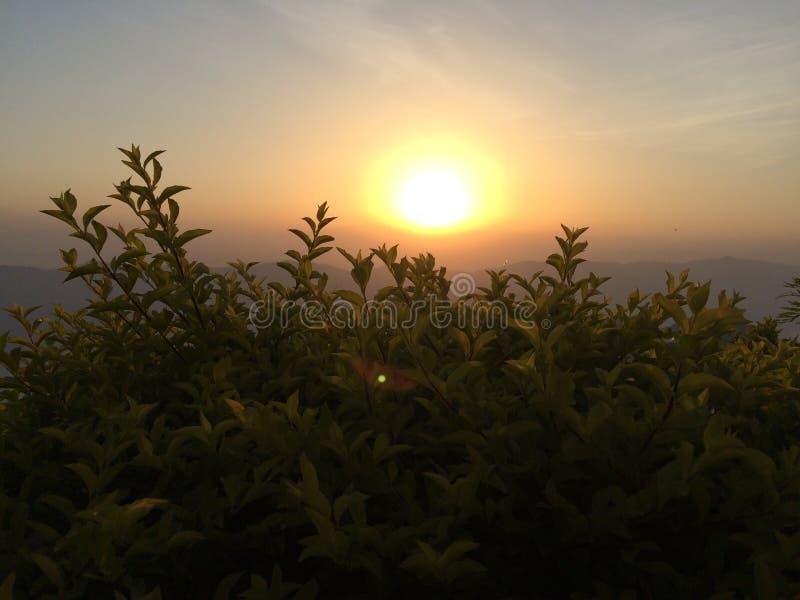 Słońca wzrastać naturalny obraz stock
