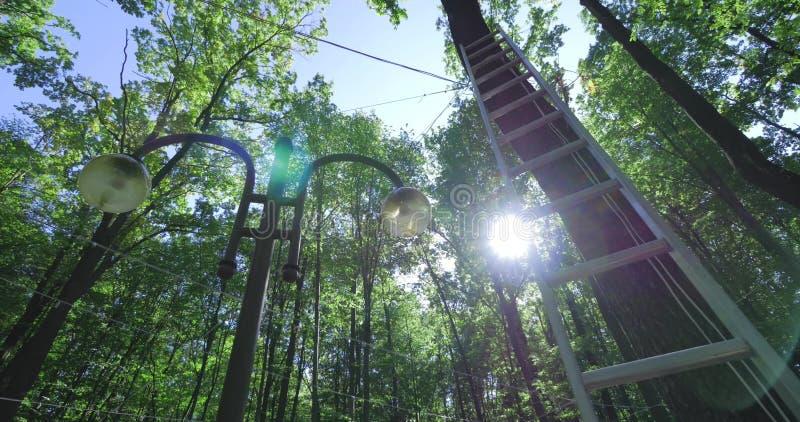Słońce błyszczy przez drzew obraz stock