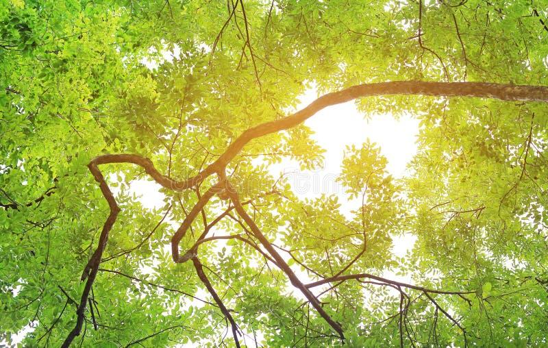 Słońce błyszczy przez drzew w lesie obraz royalty free