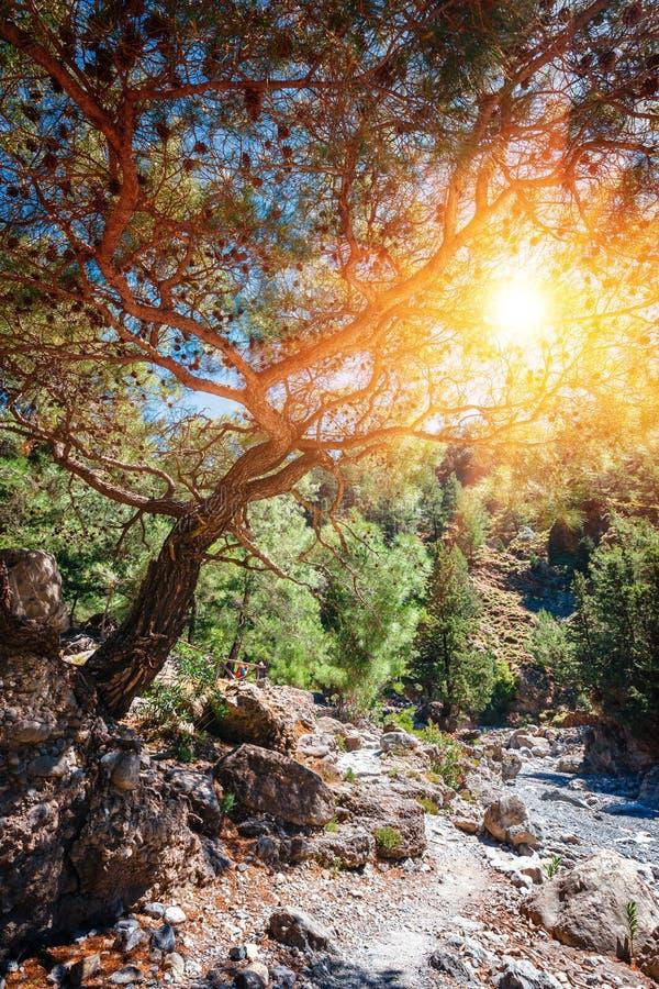 Słońce błyszczy przez krawędzi jar w Samaria wąwozie zdjęcie royalty free