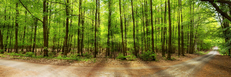 Słońce błyszczy przez zielonych deciduous drzew w lesie zdjęcie royalty free