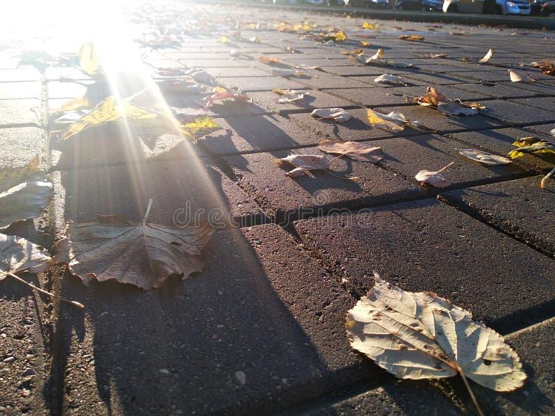 Słońce blisko gruntuje pod brukiem z opuszczającymi liśćmi Miasta słońca wydźwignięcie zdjęcie stock