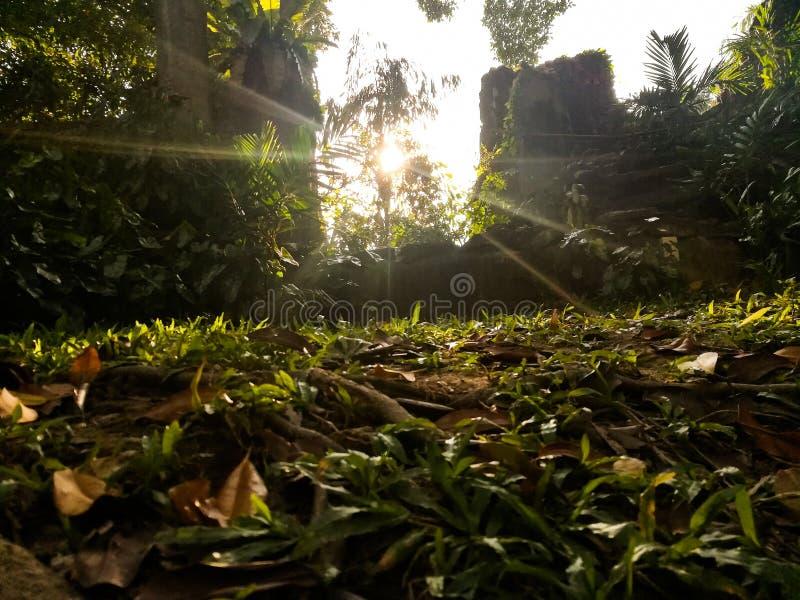 Słońce iść w dół obrazy royalty free
