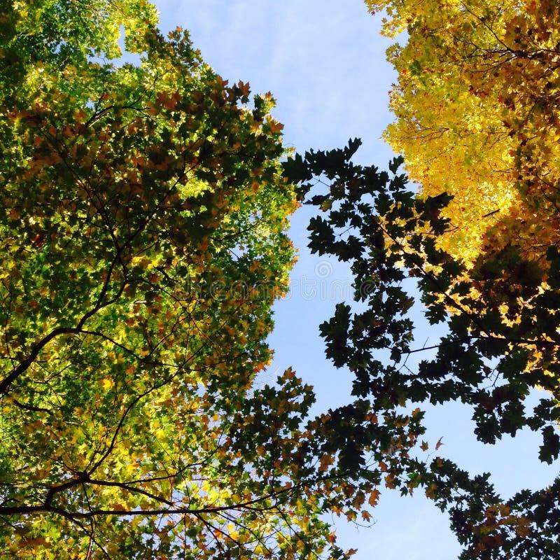 Słońce i liście obraz royalty free