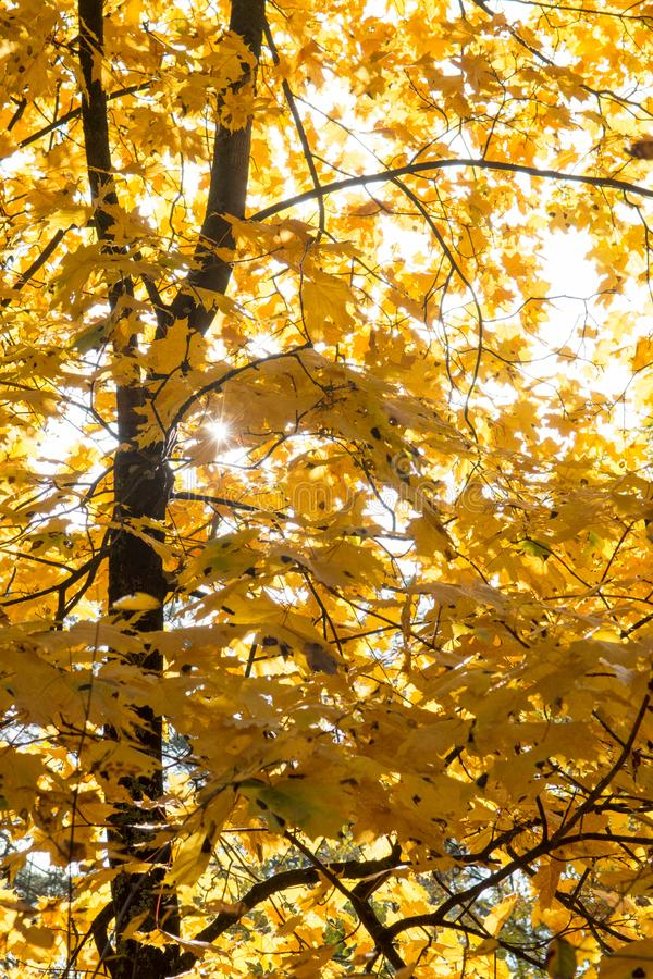 Słońce i liście w jesień lesie obrazy stock
