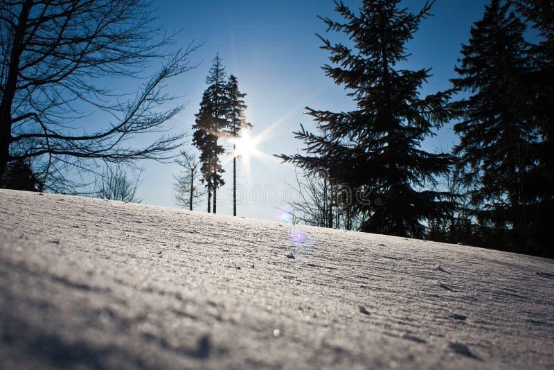 Słońce i nowy śnieg fotografia stock