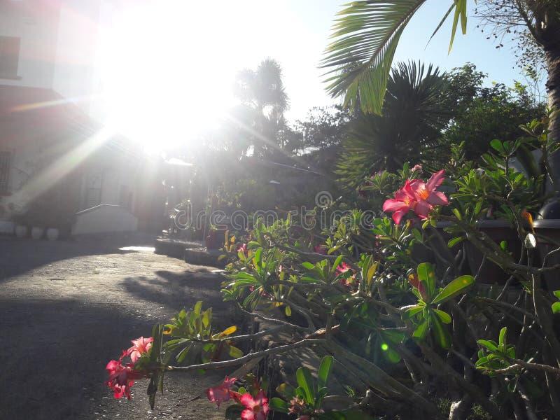 Słońce jest błyszczeć jaskrawy fotografia royalty free