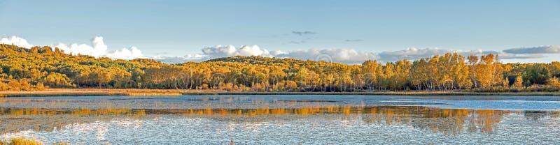 Słońce jezioro i Biała brzoza w jesieni fotografia stock