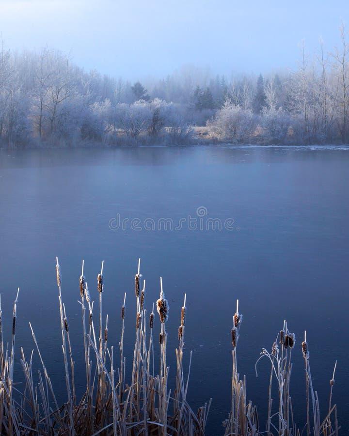 Słońce na ożypałkach w zimie obraz stock