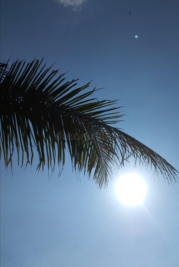 Słońce na popołudniowym niebie przez liście roślin kokosowych fotografia stock