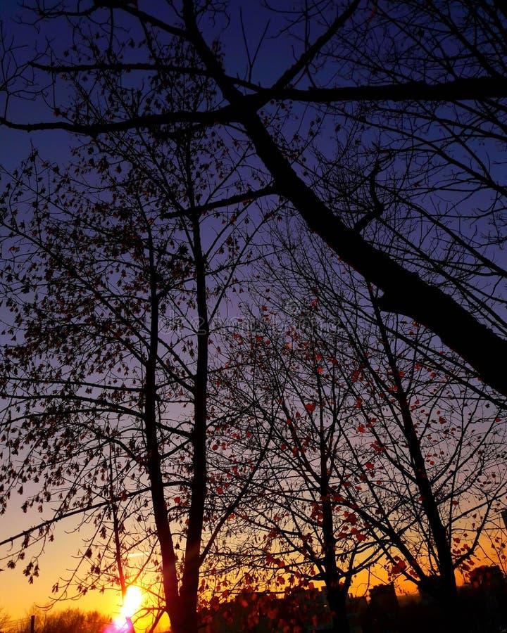 Słońce, noc, obrazy royalty free
