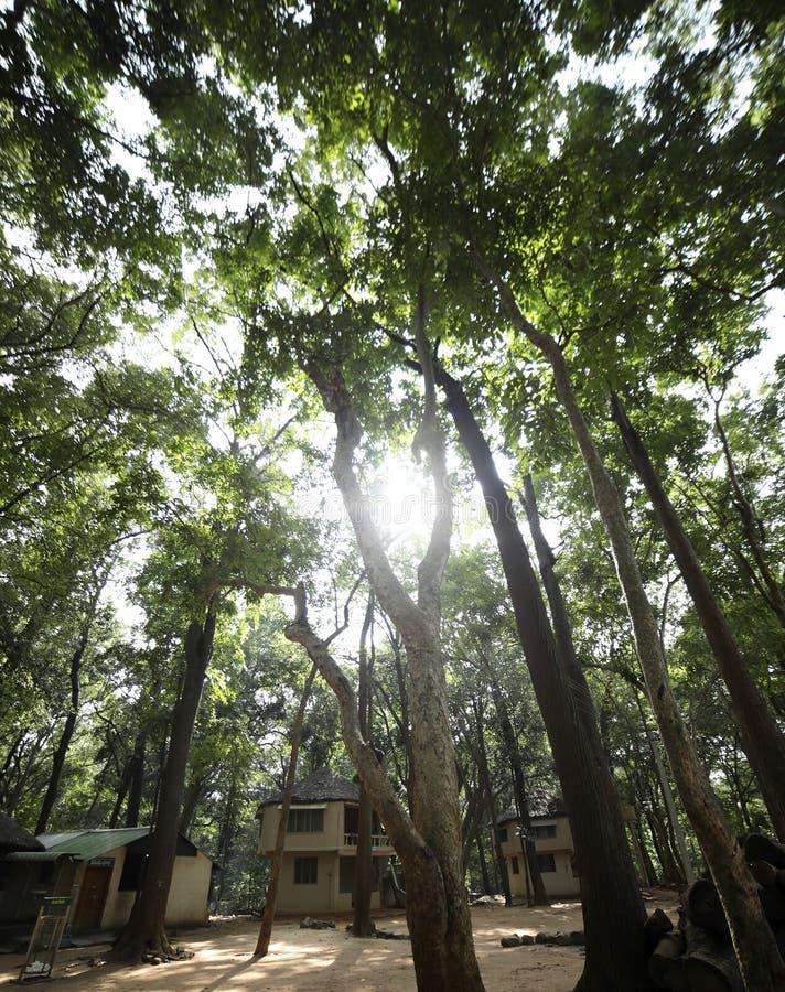 Słońce połysk w drzewach fotografia stock