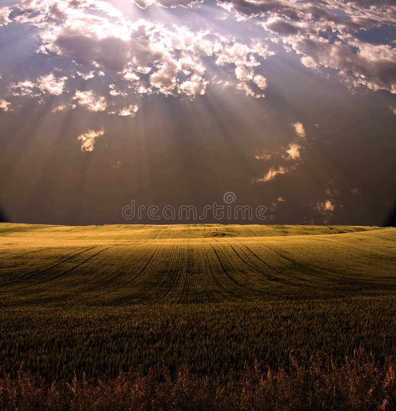 słońce pola zdjęcia royalty free