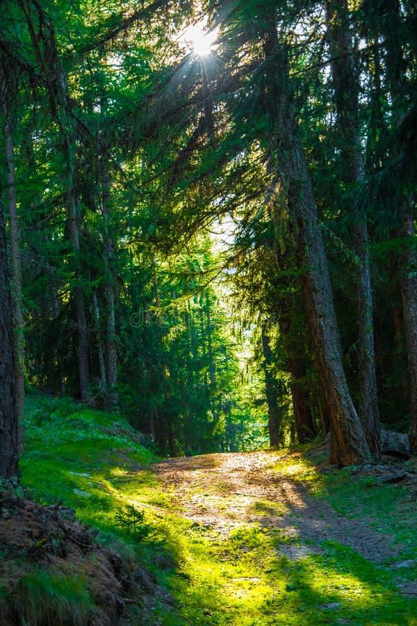 Słońce promień w drewnie zdjęcia stock