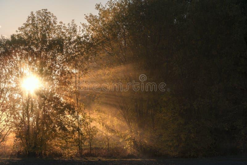 Słońce promienie błyszczy przez mgły i drzew obrazy royalty free